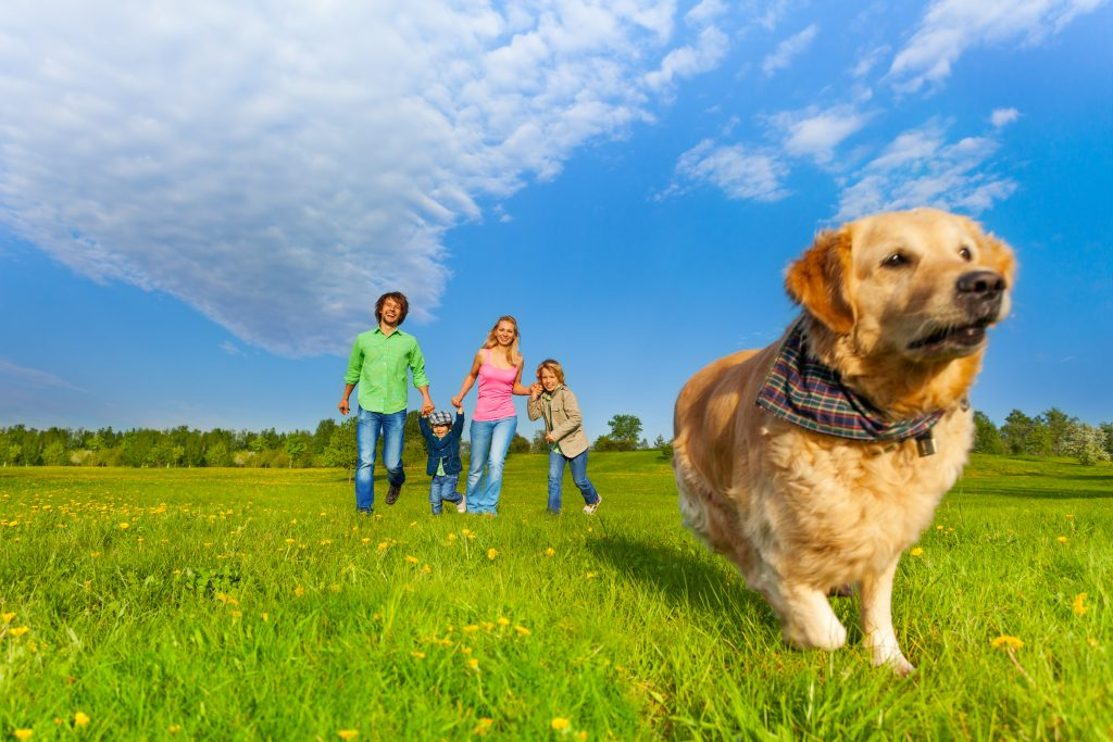 Family on walk with dog